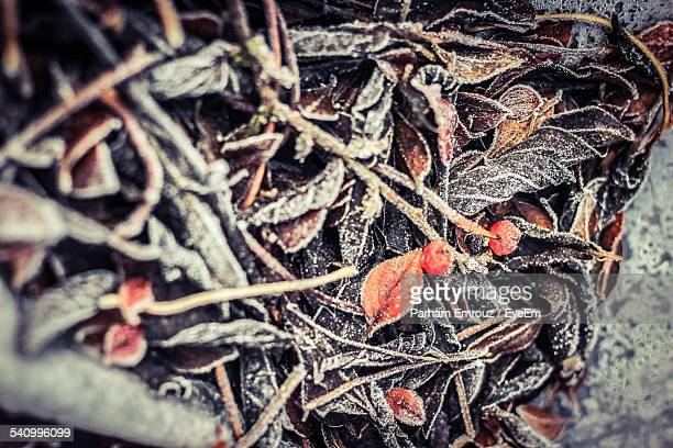high angle view of leaves fallen on ground - parham emrouz stock pictures, royalty-free photos & images