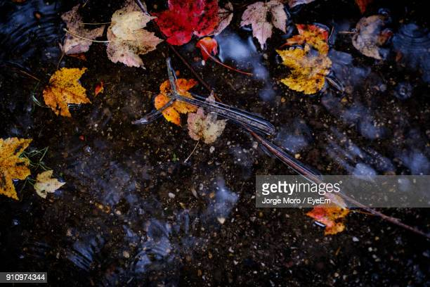 High Angle View Of Leaves In Water During Autumn