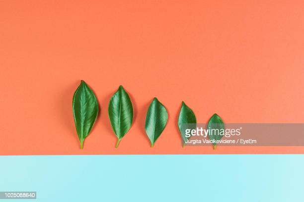 high angle view of leaves on colored background - two tone color stock pictures, royalty-free photos & images