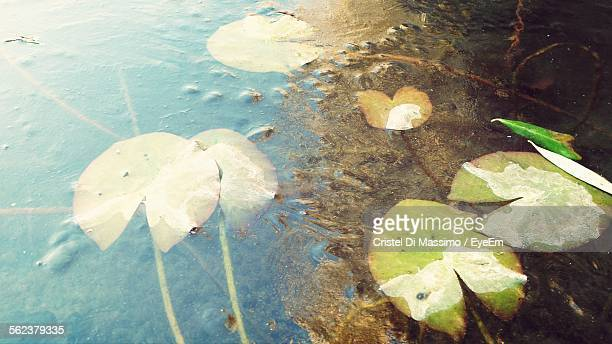 High Angle View Of Leaves On Lake