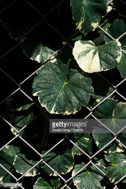 High Angle View Of Leaves On Plant