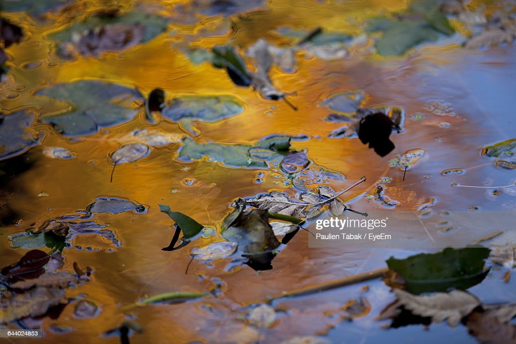High Angle View Of Leaves On Puddle : Stock Photo