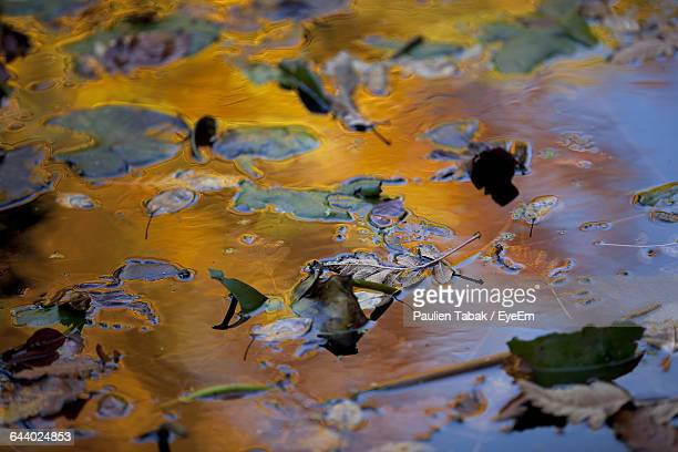 high angle view of leaves on puddle - paulien tabak stock-fotos und bilder
