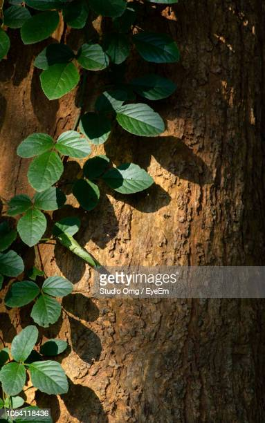 High Angle View Of Leaves On Tree Trunk