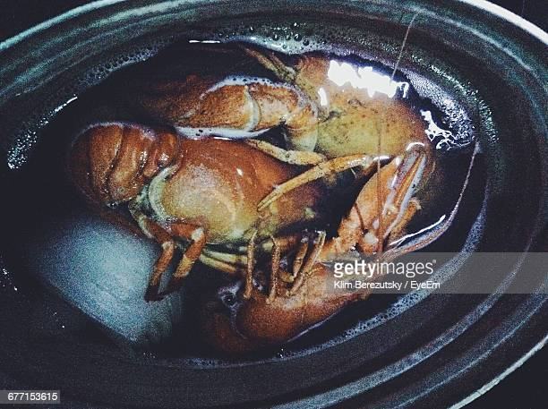 High Angle View Of Lobsters In Container