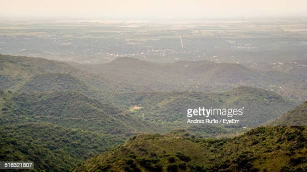 high angle view of lush foliage - andres ruffo stock pictures, royalty-free photos & images
