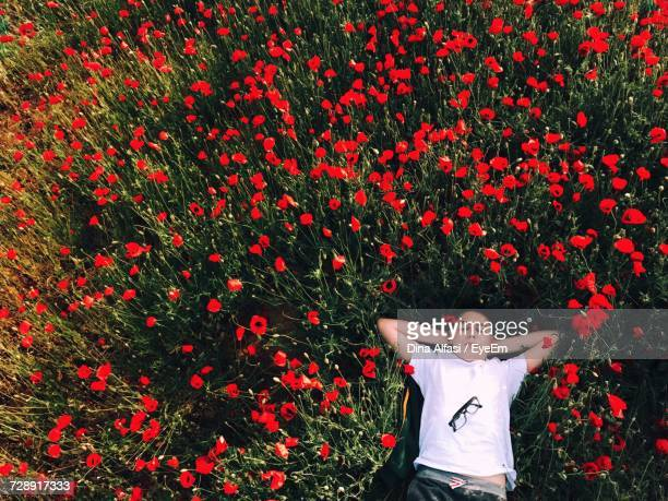 High Angle View Of Man Lying In Poppy Field