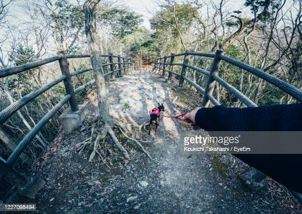 high angle view of man on staircase in forest with black dog - koukichi stock pictures, royalty-free photos & images