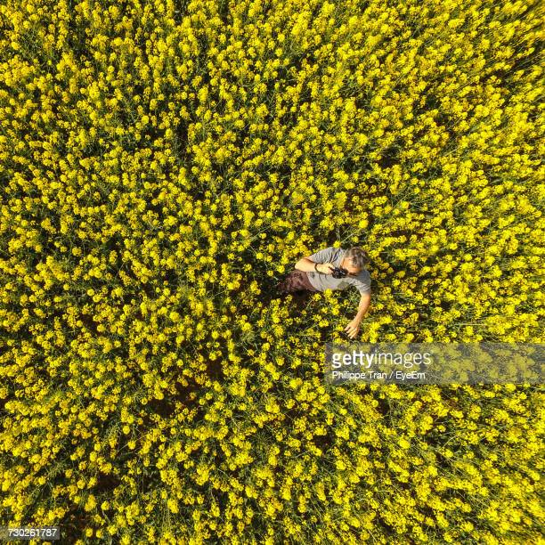 high angle view of man taking pictures - oilseed rape stock pictures, royalty-free photos & images