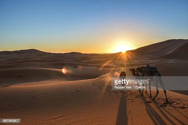 high angle view of man walking with camels in desert at merzouga - merzouga stock pictures, royalty-free photos & images