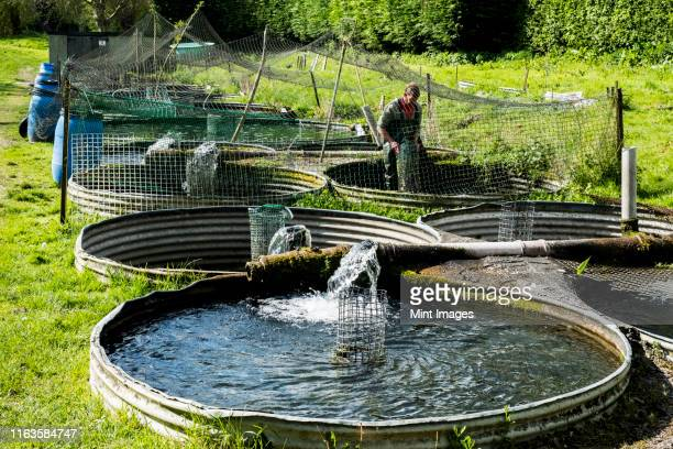 high angle view of man wearing waders working at a water tank at a fish farm raising trout. - water tower storage tank stock pictures, royalty-free photos & images