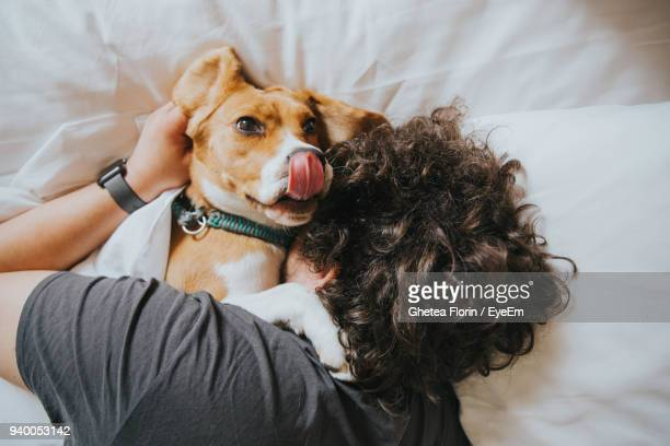 high angle view of man with dog on bed - só adultos imagens e fotografias de stock