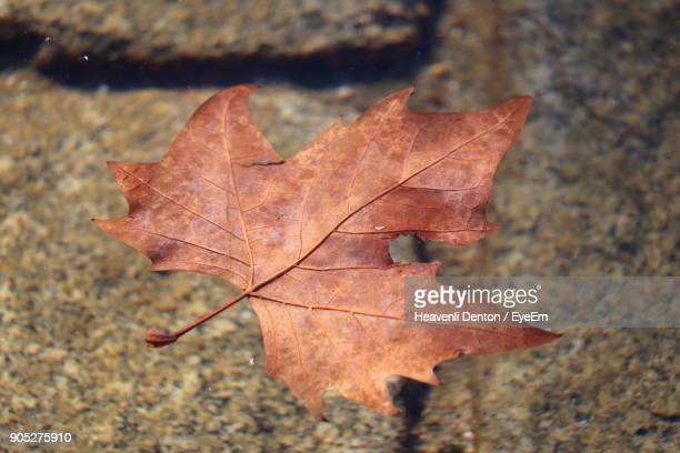 High Angle View Of Maple Leaf Fallen On Water