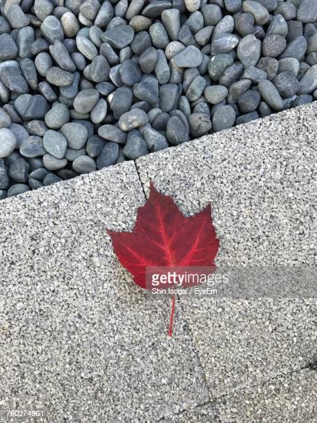 high angle view of maple leaf on pebbles - isogai ストックフォトと画像