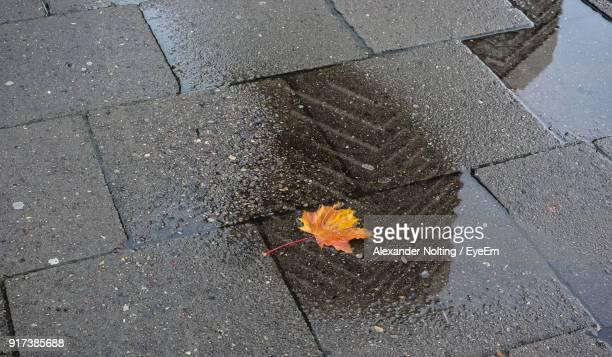 High Angle View Of Maple Leaf On Road