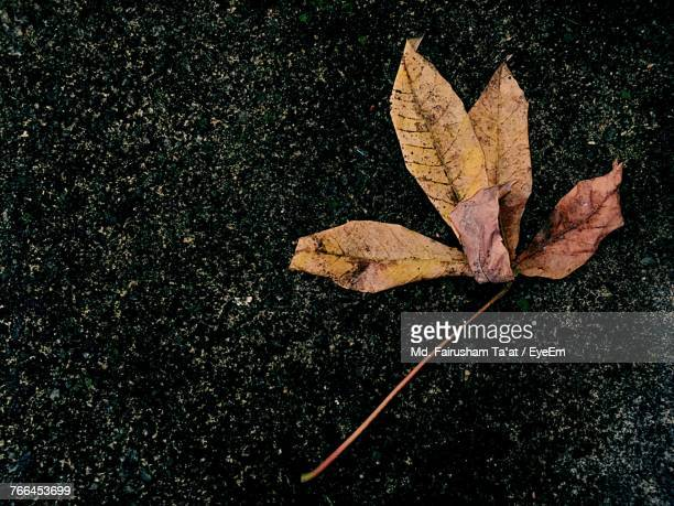 High Angle View Of Maple Leaves Fallen On Leaf