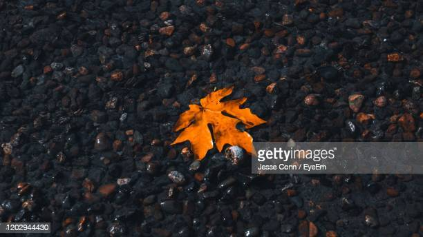 high angle view of maple leaves on street - jesse stock pictures, royalty-free photos & images