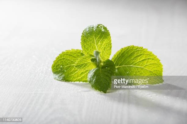 high angle view of mint leaves on table - ミント ストックフォトと画像