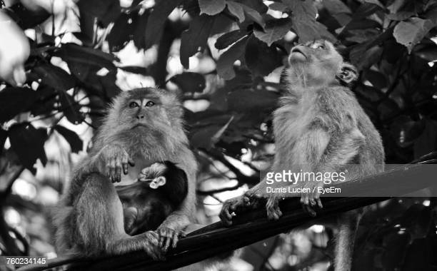 High Angle View Of Monkeys Resting On Tree