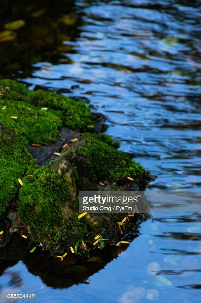 High Angle View Of Moss Covered Rocks In Lake