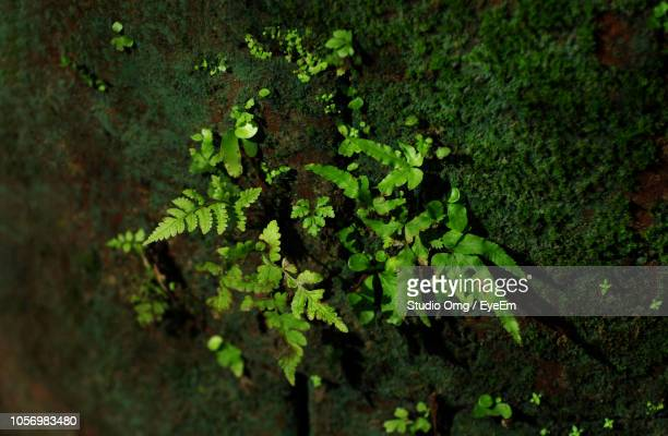 High Angle View Of Moss Growing On Tree Trunk