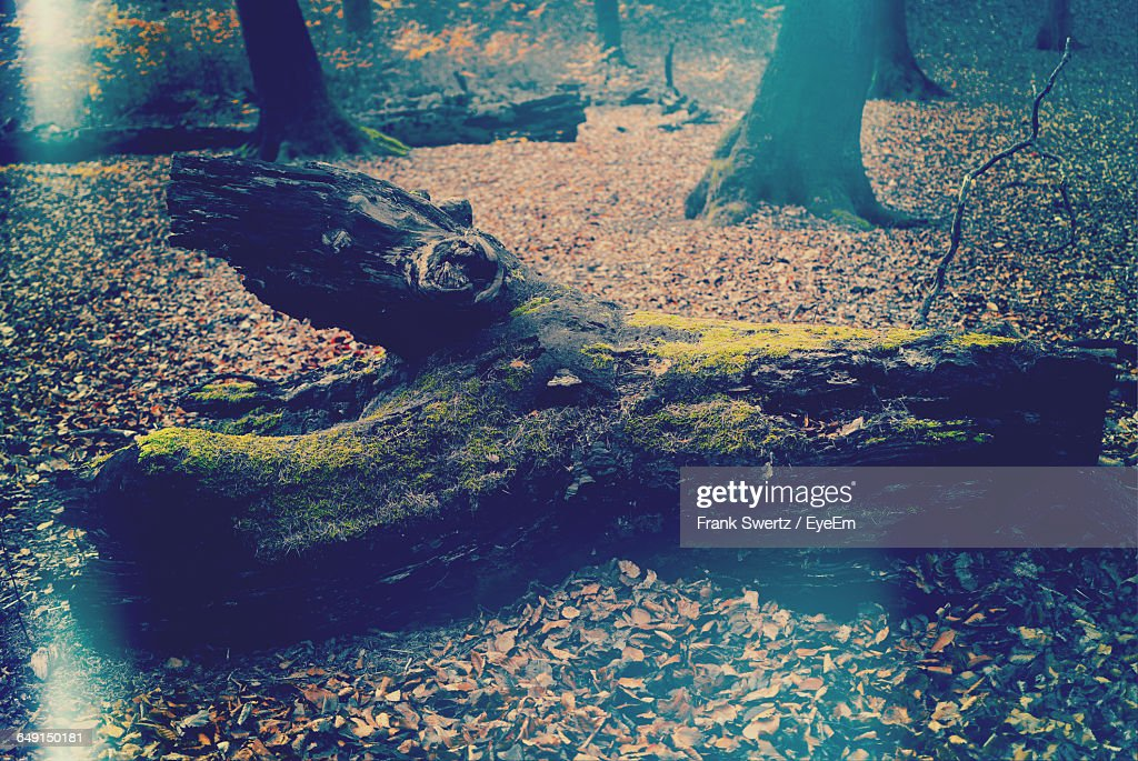 High Angle View Of Mossy Fallen Tree On Field In Forest : Stock-Foto