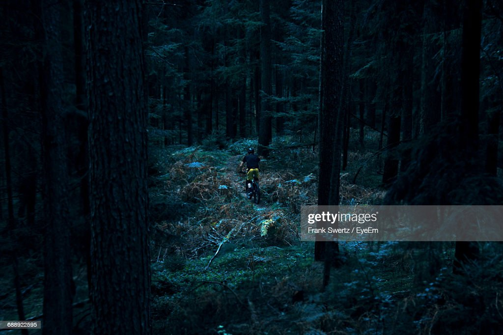 High Angle View Of Mountain Biker In The Forest : Stock-Foto