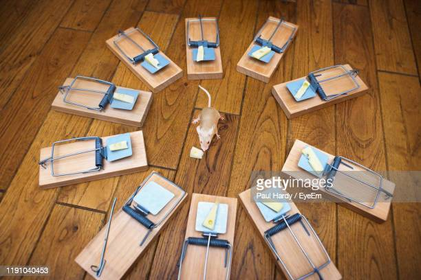 high angle view of mouse by cheese over trap on table - rodent stock pictures, royalty-free photos & images
