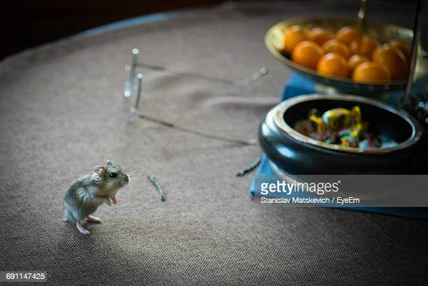high angle view of mouse on table - rodent stock pictures, royalty-free photos & images