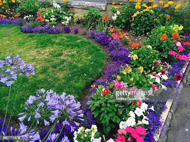 High Angle View Of Multi Colored Flower Bed In Back Yard