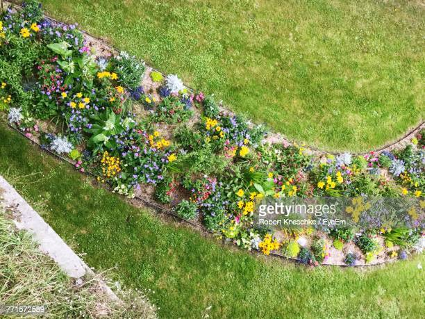 High Angle View Of Multi Colored Flowers On Field