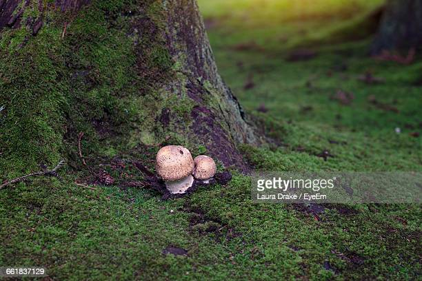 High Angle View Of Mushrooms By Tree