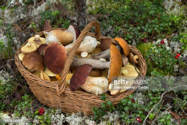 high angle view of mushrooms in basket - edible mushroom stock pictures, royalty-free photos & images