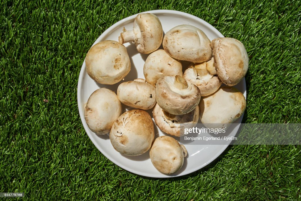 High Angle View Of Mushrooms On Artificial Green Grass : Stock Photo