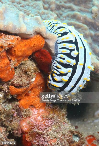 High Angle View Of Nudibranch In Sea