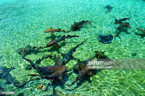 High Angle View Of Nurse Sharks Swimming In Undersea At Exuma