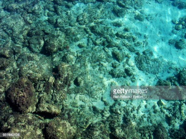 high angle view of ocean floor - ocean floor stock pictures, royalty-free photos & images