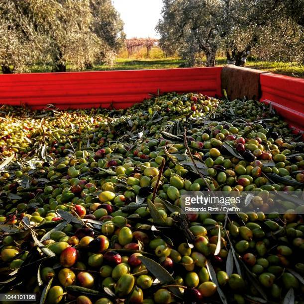 high angle view of olives in container on field - green olive stock photos and pictures