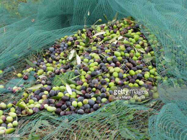 high angle view of olives on net - green olive stock photos and pictures