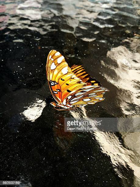 High Angle View Of Orange Butterfly Hovering Over Water With Reflection