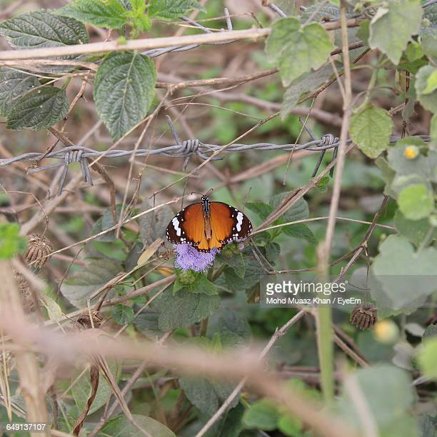 High Angle View Of Orange Butterfly Perching On Plant