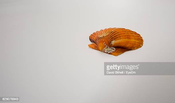 High Angle View Of Orange Cockleshell On White Background