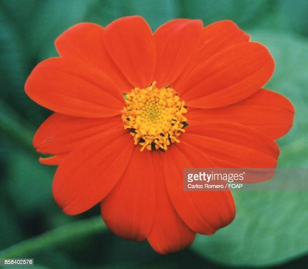 High angle view of orange flower