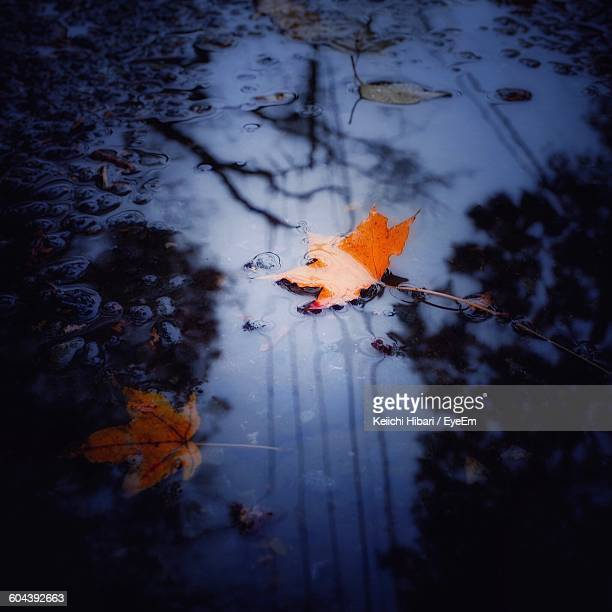High Angle View Of Orange Leaves On Puddle At Dusk