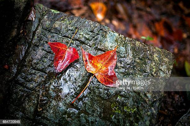 High Angle View Of Orange Leaves On Wet Rock
