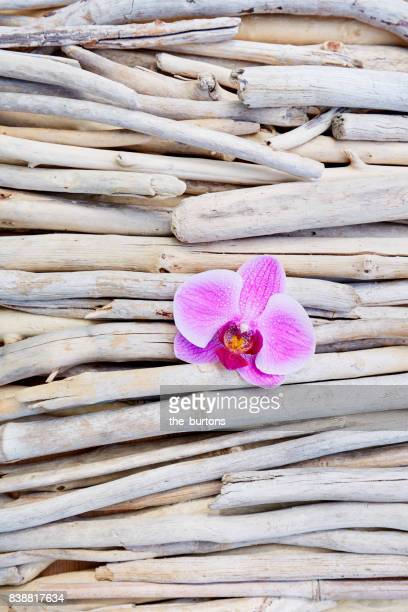 High angle view of orchid blossom on wood, tranquil scene