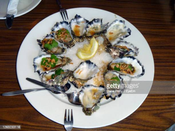 high angle view of oysters in plate on table - batemans bay stock pictures, royalty-free photos & images