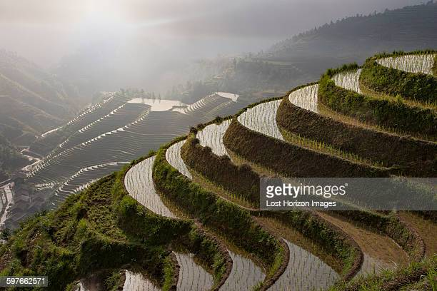 High angle view of paddy fields at Longsheng terraced ricefields, Guangxi Zhuang, China