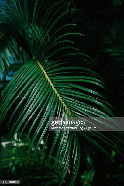 High Angle View Of Palm Leaves At Night
