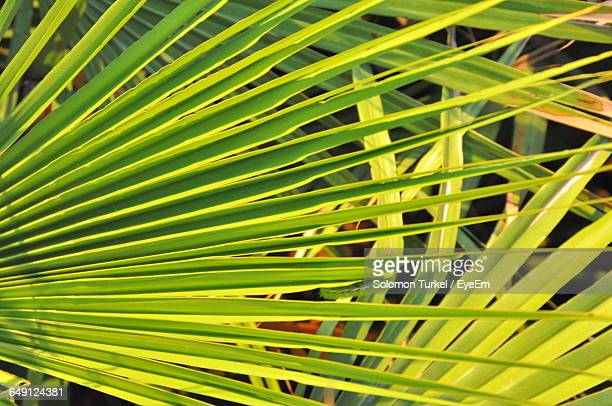 high angle view of palm leaves - solomon turkel stock pictures, royalty-free photos & images